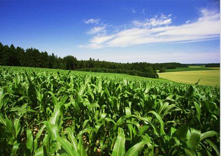 เกษตรสีเขียว (Green Agriculture)
