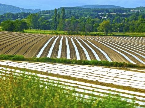 crop-967942_640