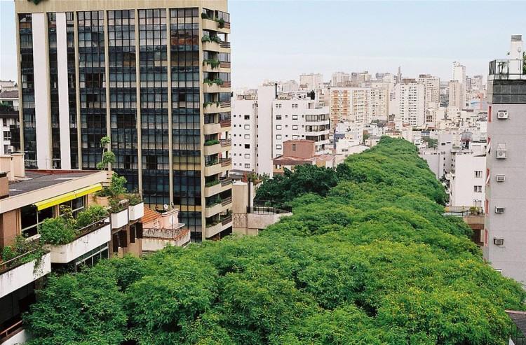 ป่าในเมือง 1