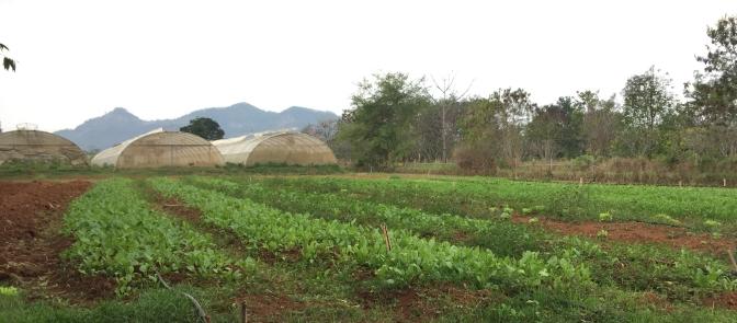 เกษตรอินทรีย์กับการเป็นมิตรต่อสิ่งแวดล้อม